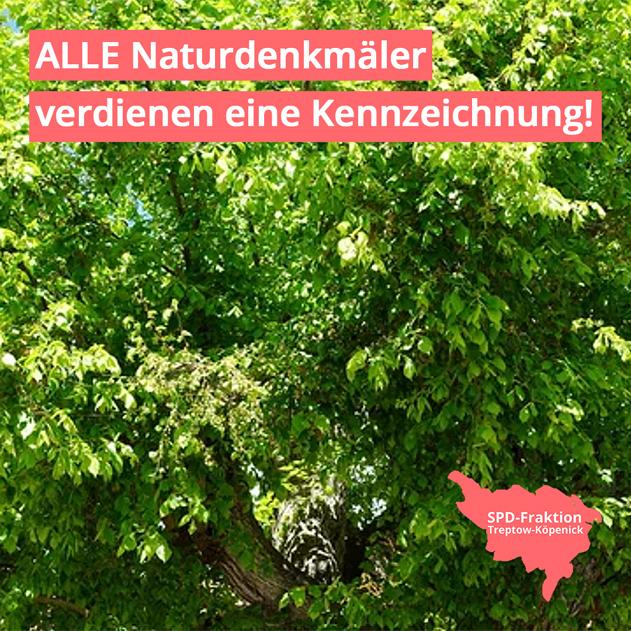 Kachel Beschluss_Naturdenkmäler